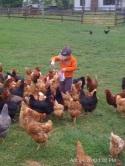 Feeding chickens at Chicama Run Farm